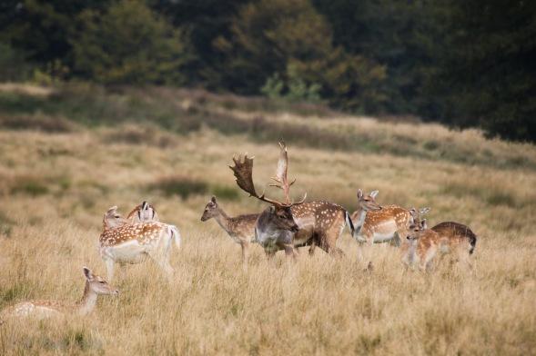 female-deer-2-of-10